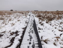 Fotspår i snowen Arkivfoton