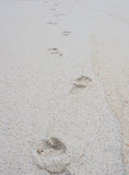 Fotspår på den sandiga stranden Royaltyfria Foton