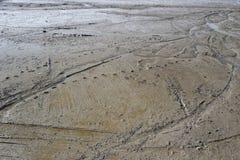 Fotspår på den tidvattens- lägenheten Arkivbilder