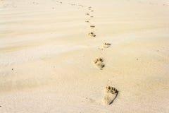 Fotspår på stranden Royaltyfria Foton