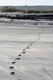 Fotspår på stranden och fördärvar Arkivbilder