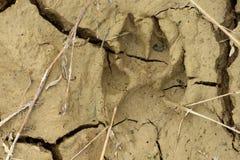 fotspårhund Fotografering för Bildbyråer