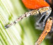 Fotspindel i natur supermakrosommar för 2009 blomma Arkivfoto