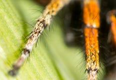 Fotspindel i natur supermakrosommar för 2009 blomma Arkivfoton