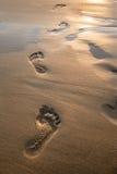 Fotsteg i sand på solnedgången Härlig sandig tropisk strand med fotspår på kustbakgrunden fotografering för bildbyråer