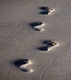 Fotsteg i sanden fotografering för bildbyråer