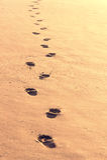 Fotsteg i sanden Arkivbild