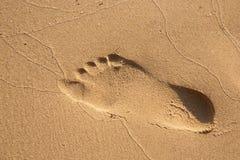 Fotsteg i sandigt på stranden Royaltyfria Foton
