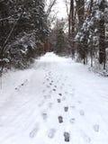 Fotsteg i snö på den skogsbevuxna banan royaltyfria bilder