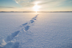 Fotsteg på snö på en djupfryst sjö arkivbild