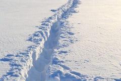 Fotsteg på snowen arkivfoton
