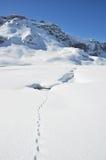 Fotsteg på snowen royaltyfria bilder
