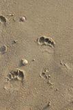 Fotsteg på stranden Fotografering för Bildbyråer