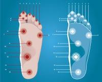 Fott masage points. Vector illustration of foot massage points Stock Image