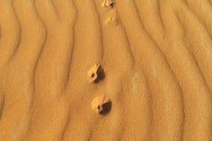 Fottryck av en liten räv på sand royaltyfri bild