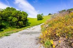 Fotvandra banan uppställd med vildblommor, parkerar Rancho San Vicente Open Space Preserve, del av det Calero länet, Santa Clara  fotografering för bildbyråer