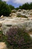fotvandra berg Royaltyfria Foton