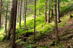 fotvandra bergtrail Tatra nationalpark i Zakopane Royaltyfria Bilder