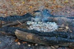 Fotvandra brandställebbq i skog med den lilla brand och askaen royaltyfria foton