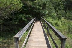 Fotvandra bron leder till skogen royaltyfri foto