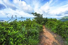 Fotvandra copoliaslingan, vaggar granit i djungeln på mahé, s fotografering för bildbyråer