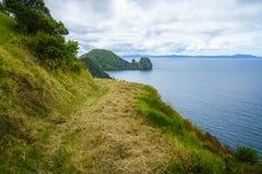 Fotvandra Coromandel den kust- gångbanan, Nya Zeeland 17 Arkivbild