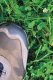 Fotvandra den kängaav-väg skon, vått grönt sommargräs och växt av släktet Trifoliummodellen Arkivfoto