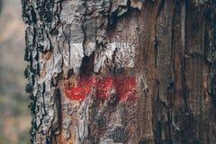 Fotvandra fläckar på en trädstam Röd och vit signal längs att fotvandra slingan Signalslinga i bergen fotvandra för skog Royaltyfri Bild