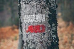 Fotvandra fläckar på en trädstam Röd och vit signal längs att fotvandra slingan Signalslinga i bergen fotvandra för skog Royaltyfria Foton
