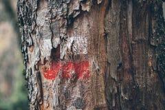 Fotvandra fläckar på en trädstam Röd och vit signal längs att fotvandra slingan Signalslinga i bergen fotvandra för skog Royaltyfri Foto