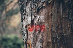 Fotvandra fläckar på en trädstam Röd och vit signal längs att fotvandra slingan Signalslinga i bergen fotvandra för skog Arkivbild