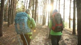 Fotvandra folk - två fotvandrarekvinnor som går i skog på den soliga dagen stock video