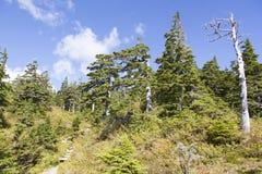 Fotvandra i Alaska Arkivbild