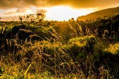 Fotvandra i buske Arkivfoton