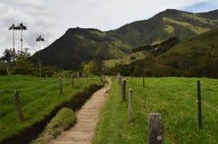 Fotvandra i den Cocora dalen, Colombia Arkivbilder