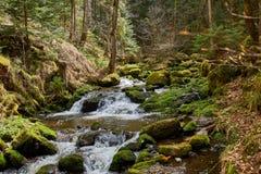 Fotvandra i den flodravenna kanjonen i den svarta skogen i Tyskland royaltyfria foton