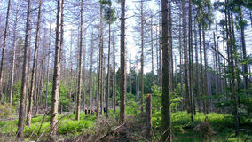 Fotvandra i en tysk sommar i skogen Royaltyfri Bild