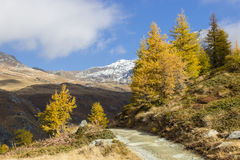 Fotvandra i högt berg Höstfärger i morgonen Lärk tr arkivbilder