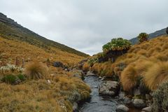 Fotvandra Mount Kenya arkivbild