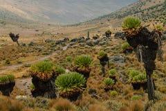 Fotvandra Mount Kenya arkivfoton