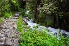 Fotvandra på den forntida Inca Trail stenlade banan till Machu Picchu peru Inga personer royaltyfri bild