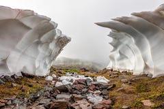 Fotvandra på Mount Rainier arkivfoto