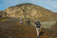 Fotvandra på Punta Pitt i San Cristobal Island Arkivbild