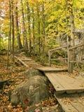 fotvandra park Arkivbild