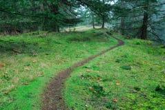 fotvandra regntrail för skog Royaltyfri Fotografi