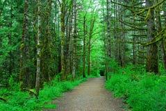 fotvandra regntrail för skog Arkivbilder