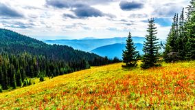Fotvandra skuggar på Tod Mountain nära byn av solmaxima av British Columbia, Kanada arkivfoto