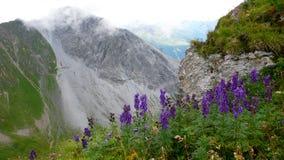 Fotvandra slinga och tunnel på en brant bergframsida som är hög upp i fjällängarna av Schweiz med purpurfärgade wildlowers i förg arkivbild