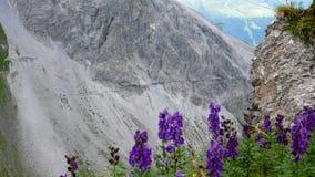 Fotvandra slinga och tunnel på en brant bergframsida som är hög upp i fjällängarna av Schweiz med purpurfärgade wildlowers i förg royaltyfria foton