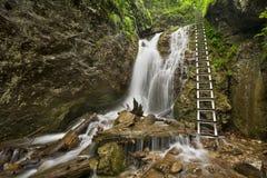 Fotvandra slingan i en frodig klyfta i Slovenskà ½ Raj, Slovakien Fotografering för Bildbyråer